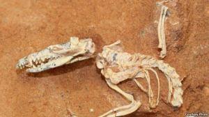 Fosili i gjetur në New Mexico, 10 milionë vjet i vjetër